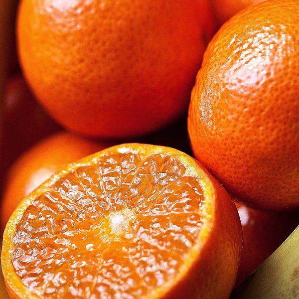 Orangepressée